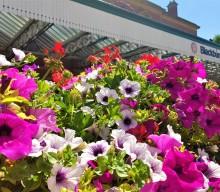 Blooming Blackburn hopes for Triple Success