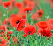 100 Years of Remembrance: Events being held throughout Blackburn Town Centre