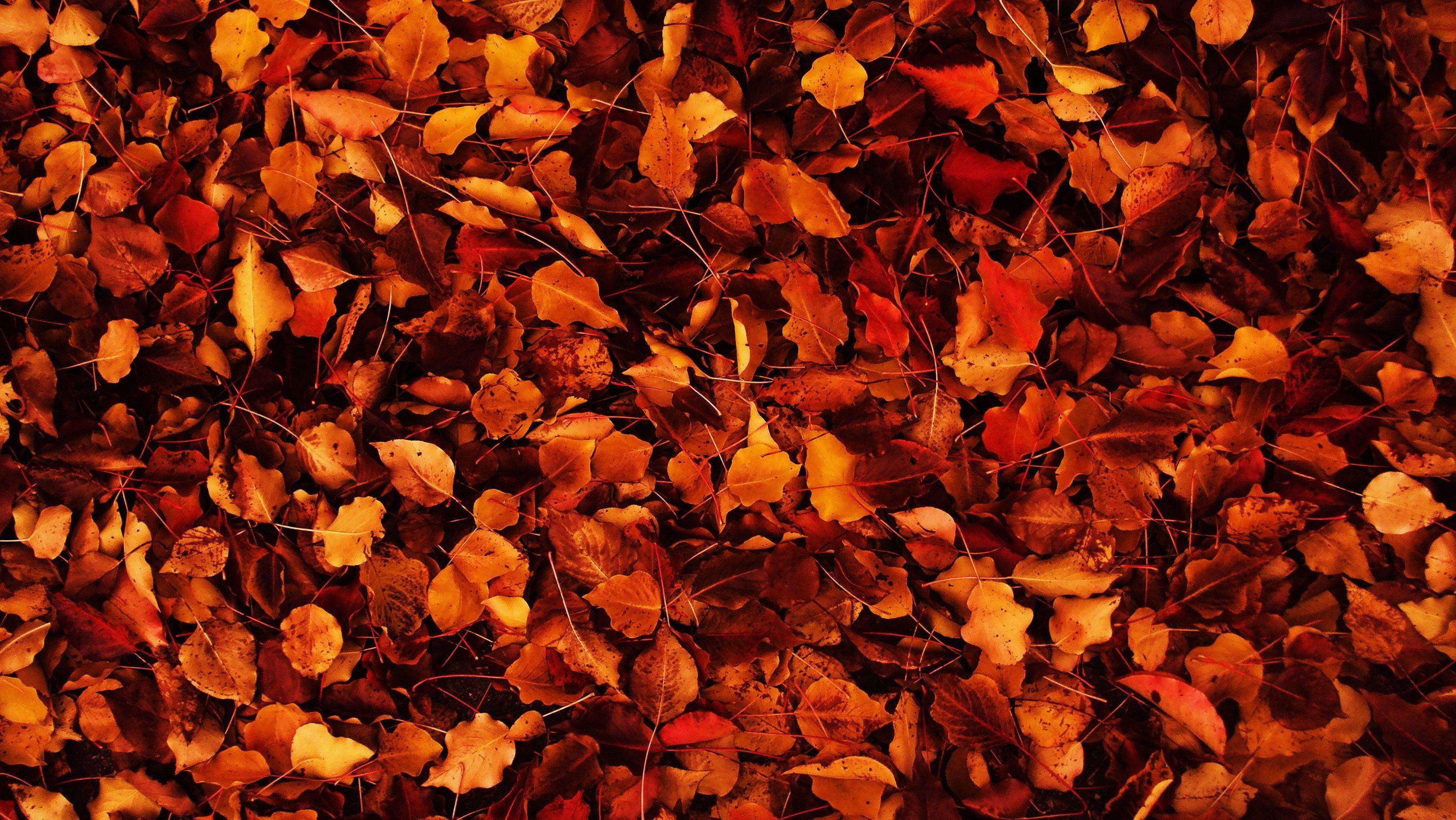 Autumn Wallpaper Tumblr Blackburn Bid